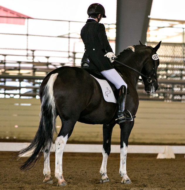 Audrey Steinbach, sitting black horse in competition. Black jacket, riding hat, white riding pants and black riding boots