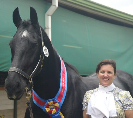 Black horse in a halter wearing a champion sash around his neck standing next to his owner after a class at a show for Training and Lessons