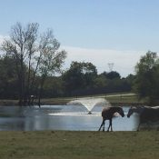 Three horses standing in front of a pond with a fountain in the middle for Horse Boarding