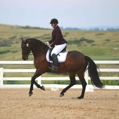 Bay horse in outdoor show arena with white fencing and green hills in the background with a rider in maroon show coat and white breeches for Ashley Bearden