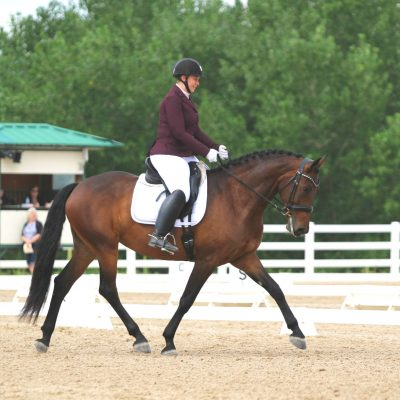 Bay horse in outdoor show arena with a judges stand and white fending in the background with rider in maroon show coat and white breeches for Ashley Bearden