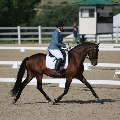 Bay horse in outdoor show arena with a judges stand and a lady in the background with rider in light blue show coat and white breeches for Ashley Bearden