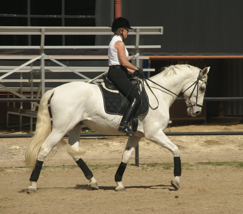 World class riding stables in the Dallas/Ft  Worth area