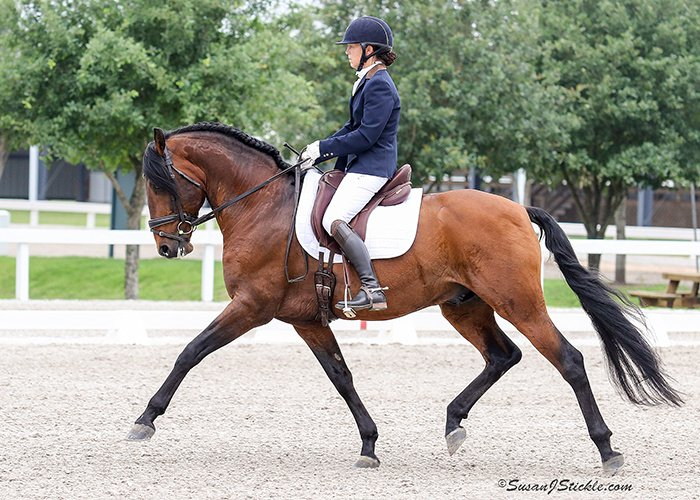Rider in navy show coat and white breeches riding bay horse in outdoor show arena for Christina Hall