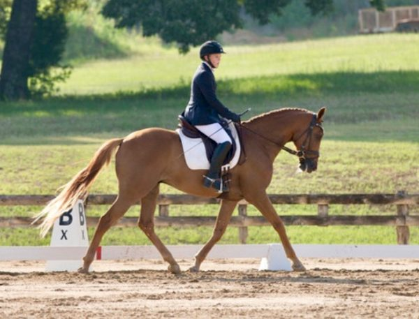Chestnut horse in dressage show arena outdoors with green grassy hill behind and rider in dark show coat for Allison Sohmer