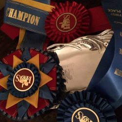 Red, blue and yellow champion ribbon with blue ribbon and red ribbon near a champion silver colorer plate for Facility