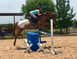 Chestnut and white appaloosa horse with rider in teal top and grey breeches jumps and blue and white fence with two big blue barrels in front in the outdoor arena with green trees in the background for Sales and Leasing