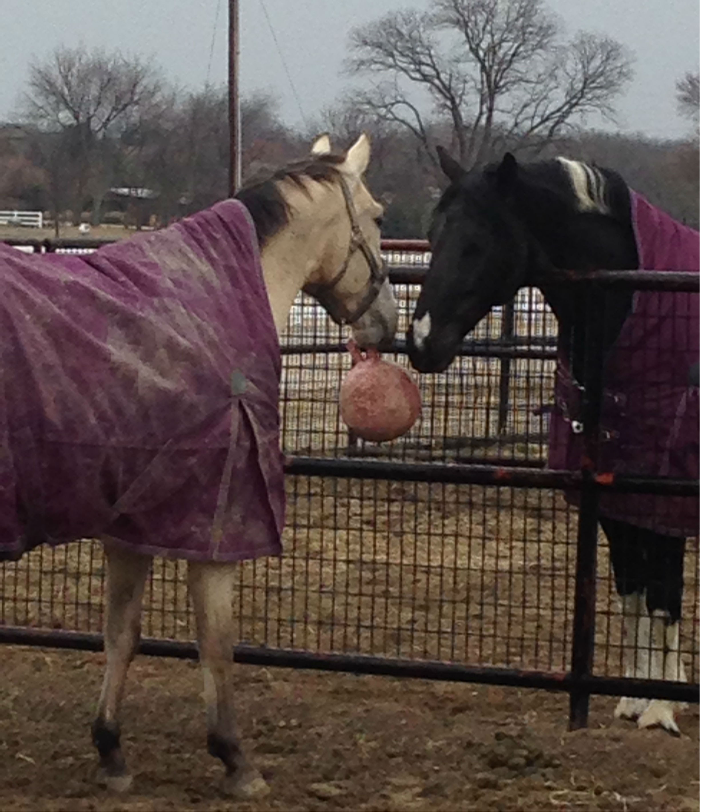 Premier horse boarding stables in the Dallas area | Whispering Farms