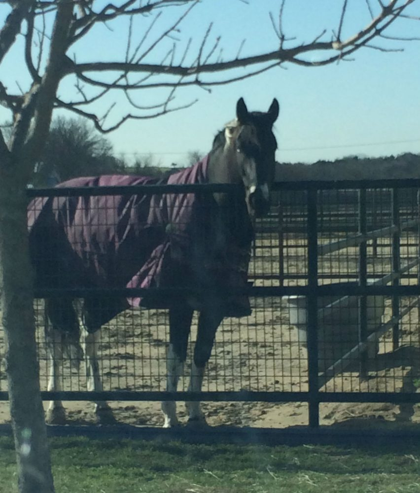 The finest in Horse Boarding and Equestrian Training   Whispering Farms