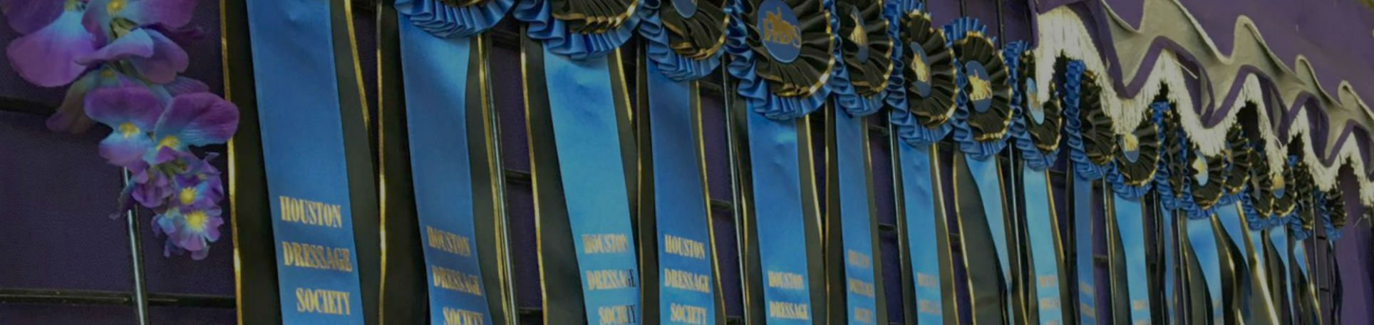 Close up of a wall of blue ribbons hanging on a grid on a purple wall for Training and Lessons